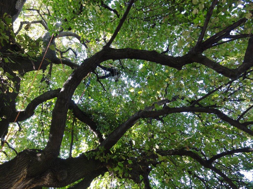 stromy 3