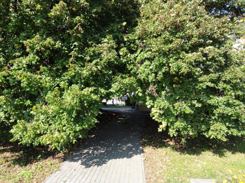 stromy 7