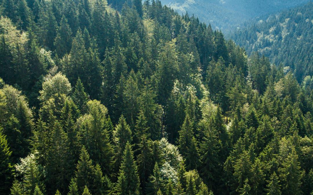 Prvá certifikačná skúška – Slovenský certifikovaný arborista – pozemný pracovník 17. 10. 2019